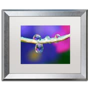 "Trademark Fine Art ''Double Drops'' by Steve Wall 16"" x 20"" White Matted Silver Frame (SW0007-S1620MF)"