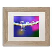 """Trademark Fine Art ''Double Drops'' by Steve Wall 11"""" x 14"""" White Matted Wood Frame (SW0007-T1114MF)"""