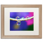 """Trademark Fine Art ''Double Drops'' by Steve Wall 16"""" x 20"""" White Matted Wood Frame (SW0007-T1620MF)"""