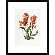 Global Gallery Star Orchid by John Lindley Framed Painting Print; 22'' H x 16.6'' W x 1.5'' D