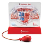 Learning Resources® Pumping Heart Model