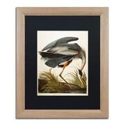 "Trademark Fine Art ''Great Blue Heron'' by John James Audubon 16"" x 20"" Black Matted Wood Frame (886511840829)"