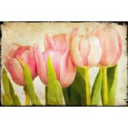 Marmont Hill Pink Tulips CU by Malek Graphic Art on Wrapped Canvas; 16'' H x 24'' W