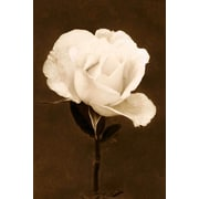 Marmont Hill Petals and Perfume by Robertson Painting Print on Wrapped Canvas; 18'' H x 12'' W