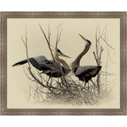 Ashton Wall D cor LLC Birds 'Great Blue Heron Pair' Framed Photographic Print
