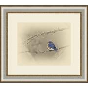 Ashton Wall D cor LLC Birds 'Blue Bird' Framed Photographic Print