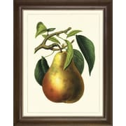 Art Virtuoso Fruit Studies by Charles Morren Framed Painting Print