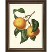 Art Virtuoso Fruit Studies by Charles Morren Framed Painting Print