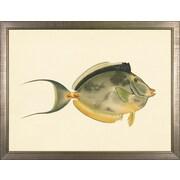 Art Virtuoso North American Fish Framed Painting Print