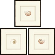 Paragon Natural Nautilus 3 Piece Framed Graphic Art Shadow Box Set (Set of 3)