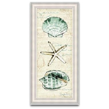 Timeless Frames Coastal Shells Framed Graphic Art