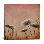 iCanvas Queen Anne's Lace by Ivy Jacobsen Graphic Art on Wrapped Canvas; 12'' H x 12'' W x 1.5'' D