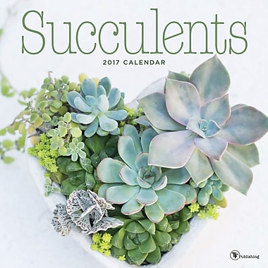 TF Publishing 2017 Succulents Wall Calendar, 12