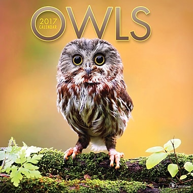 TF Publishing 2017 Owls Wall Calendar, 12