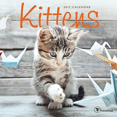 TF Publishing – Petit calendrier mural 2017, Chatons, 7 x 7 po