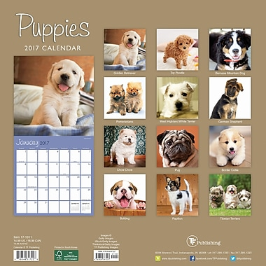 TF Publishing 2017 Puppies Wall Calendar, 12