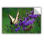 ArtWall Butterfly on Ironweed by Julie Mann Sperry Photographic Print; 16'' H x 24'' W x 0.1'' D