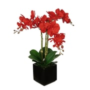 House of Silk Flowers Artificial Triple Stem Orchid in Cube Vase; Black