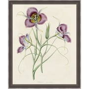 Ashton Wall D cor LLC In Bloom 'Lavender Blooms I' Framed Painting Print