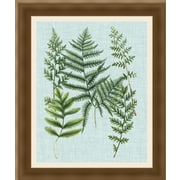 Ashton Wall D cor LLC In Bloom 'Spa Ferns I' Framed Painting Print