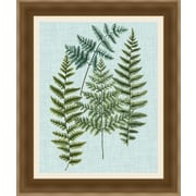 Ashton Wall D cor LLC In Bloom 'Spa Ferns II' Framed Painting Print