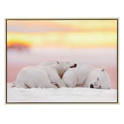 Majestic Mirror Cuddling Polar Bear Photograph Gloss Canvas with Antique Silver Frame