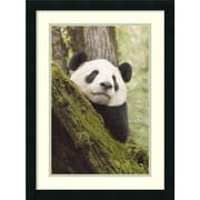 Amanti Art Katherine Feng 'Xiang Xiang, Released Into the Wild, China'  Art Print 18 x 24 in. Black Frame (DSW1418488)