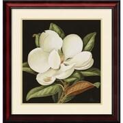 "Jenny Barron 'Magnolia Grandiflora, 2003' Framed Art Print 24"" x 25"" (DSW2971691)"