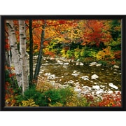 """Art.com Darrell Gulin 'Swift River with Maple Trees White Mountains, New Hampshire' 26"""" x 20"""" Print (12857890)"""