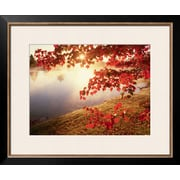 "Art.com Joseph Sohm 'Sunrise Through Autumn Leaves' 24"" x 20"" Print (10726098)"