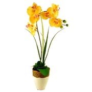 LCGFlorals Phalaenopsis Orchid and Grass in Ceramic Pot; Yellow
