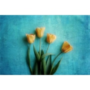 Marmont Hill Tulips by Sylvia Cook Photographic Print on Wrapped Canvas; 40  H x 60  W x 1.5  D