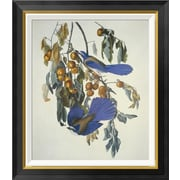 Global Gallery 'Florida Jay' by John James Audubon Framed Wall Art; 28'' H x 24.26'' W x 1.5'' D