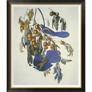 Global Gallery 'Florida Jay' by John James Audubon Framed Wall Art; 42'' H x 35.88'' W x 1.5'' D