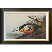 Global Gallery 'Western Duck' by John James Audubon Framed Wall Art; 19.86'' H x 28'' W x 1.5'' D
