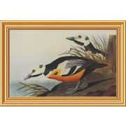Global Gallery 'Western Duck' by John James Audubon Framed Wall Art; 17.86'' H x 26'' W x 1.5'' D