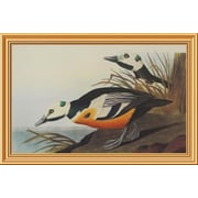 Global Gallery 'Western Duck' by John James Audubon Framed Wall Art; 22.9'' H x 34'' W x 1.5'' D