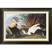Global Gallery 'Eider Duck' by John James Audubon Framed Wall Art; 19.86'' H x 28'' W x 1.5'' D