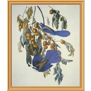 Global Gallery 'Florida Jay' by John James Audubon Framed Wall Art; 40'' H x 33.88'' W x 1.5'' D