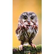 "2017-2018 TF Publishing 6.5"" x 3.5"" Backyard Birds 2 Year Pocket Calendar  (17-7001)"