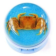 Ed Speldy East  Stapler with Real Crab with Blue Background in Acrylic (ESE482)