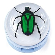 Ed Speldy East  Blue Stapler with Real Green Chafer Beetle in Acrylic (ESE552)