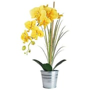 SilkFloralConcepts Orchid Desk Top Plant in Pot; Yellow