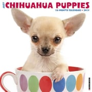 "Willow Creek Press 2017 Just Chihuahua Puppies Wall Calendar 12""H x 12""W (40554)"