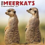 "Willow Creek Press 2017 Meercats Wall Calendar 12""H x 12""W (43012)"