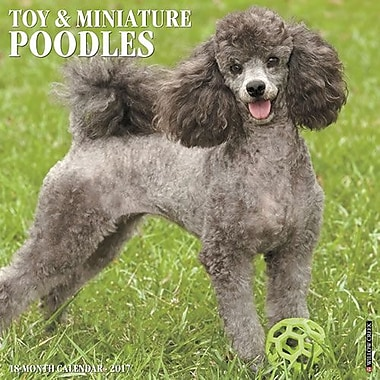 Toy Amp Miniature Poodles 2017 Wall Calendar Price Tracking
