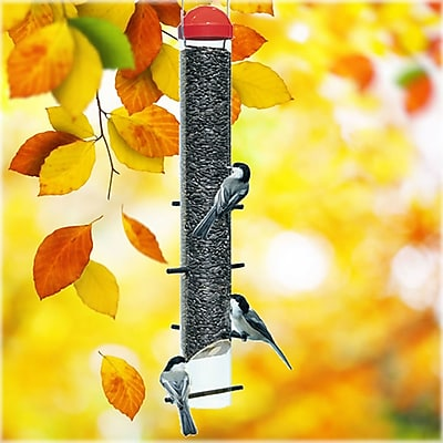 Perky Pet Sunflower Wild Tube Bird Feeder (WYF078276316924) photo