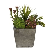 House of Silk Flowers Succulent Desk Top Plant in Planter; Grey