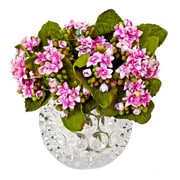 Creative Displays, Inc. Pink Kalanchoe Desk Top Plant in Thousand Eye Water Bowl