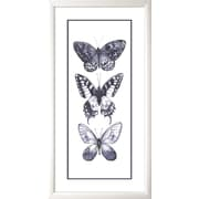 Star Creations Mono Chrome Butterflies I by Grace Popp Framed Painting Print